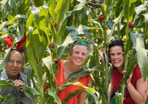 Bendigo program ripe to harvest